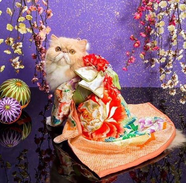 cats in kimonos 8