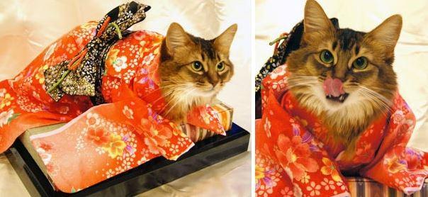 cats in kimonos 9