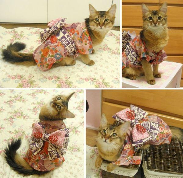 cats in kimonos 15