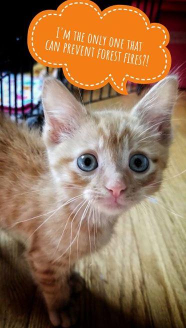 worried kitten gets captions 2