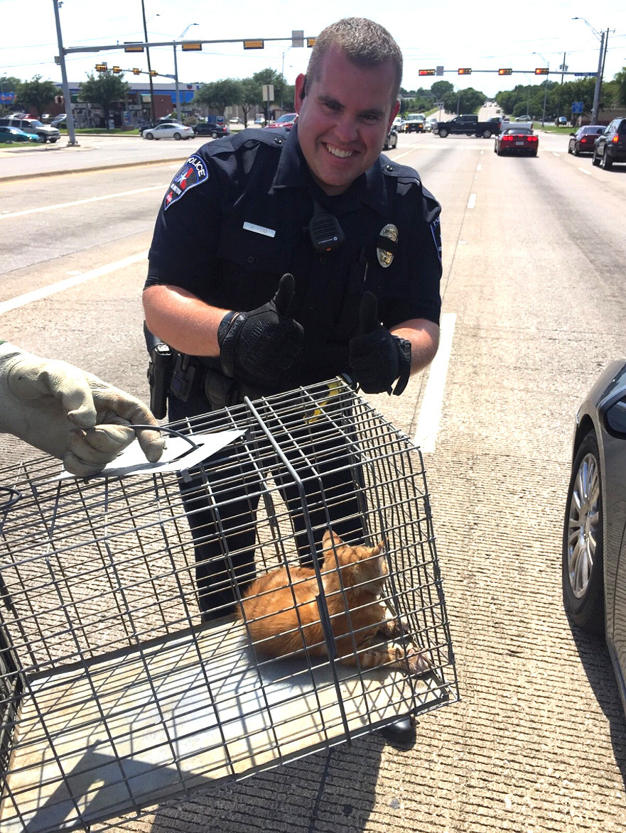 cops save kitten from traffic 2