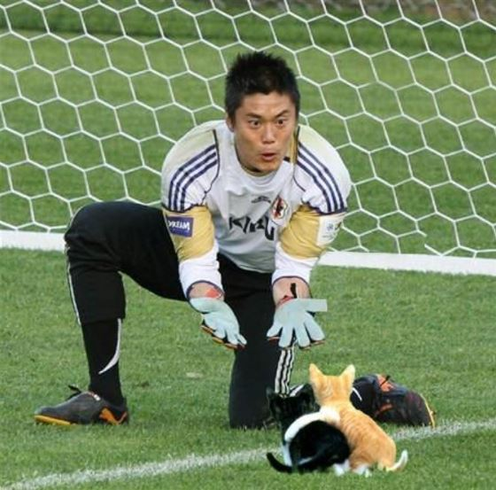 soccer balls replaced with cats 1