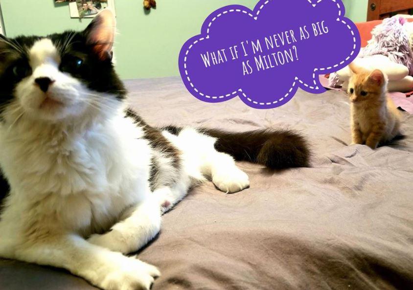 worried kitten gets captions 6