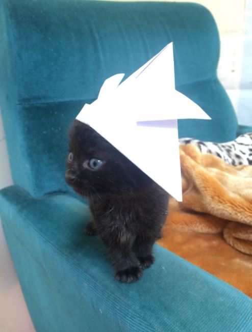 tiny hats for cats 2