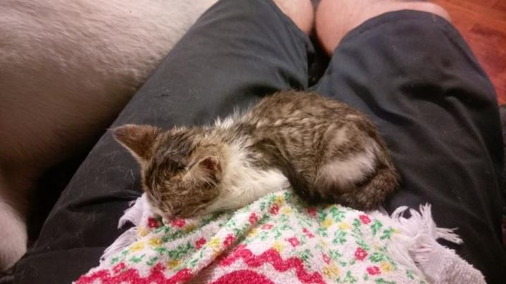 kitten found shot in streets gets forever home 1