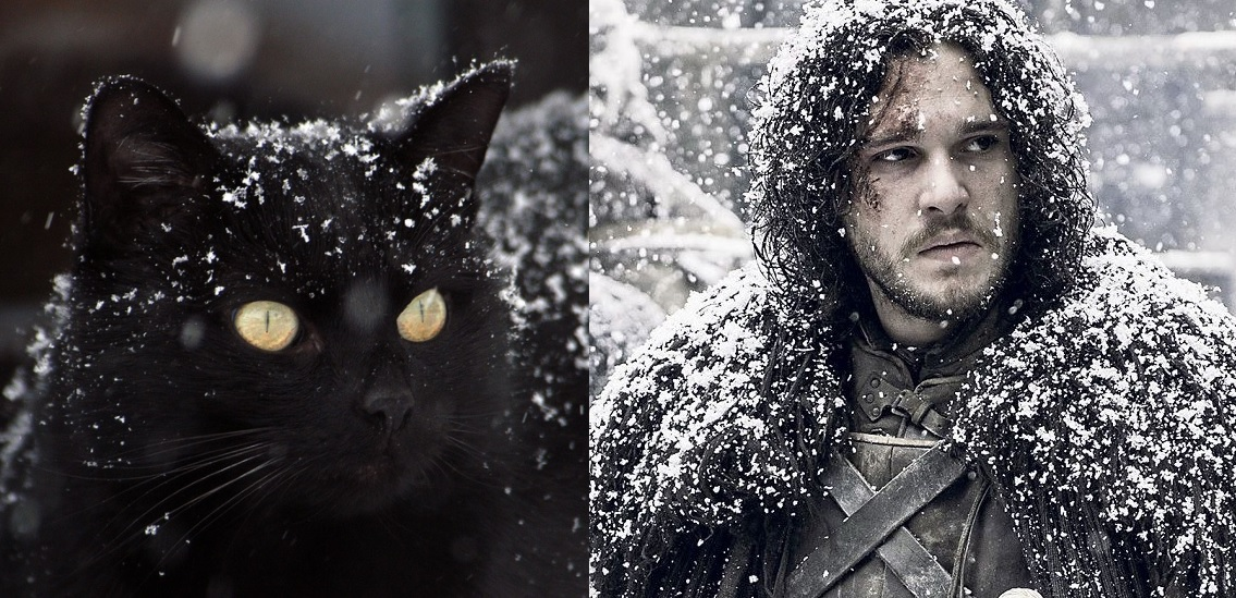 Game Of Thrones Theme Song Cats