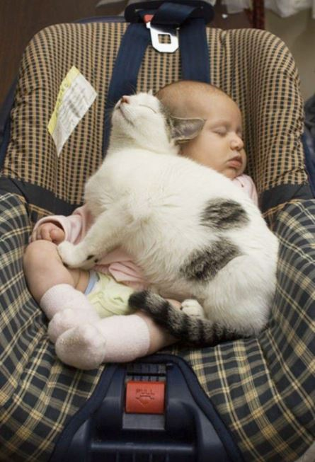 cats and kids 12