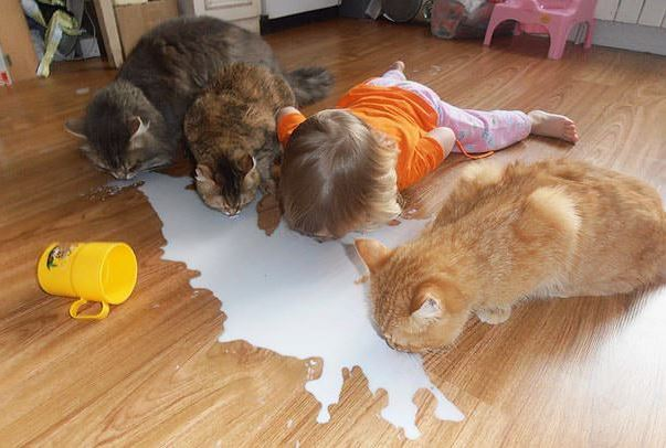 cats and kids 29