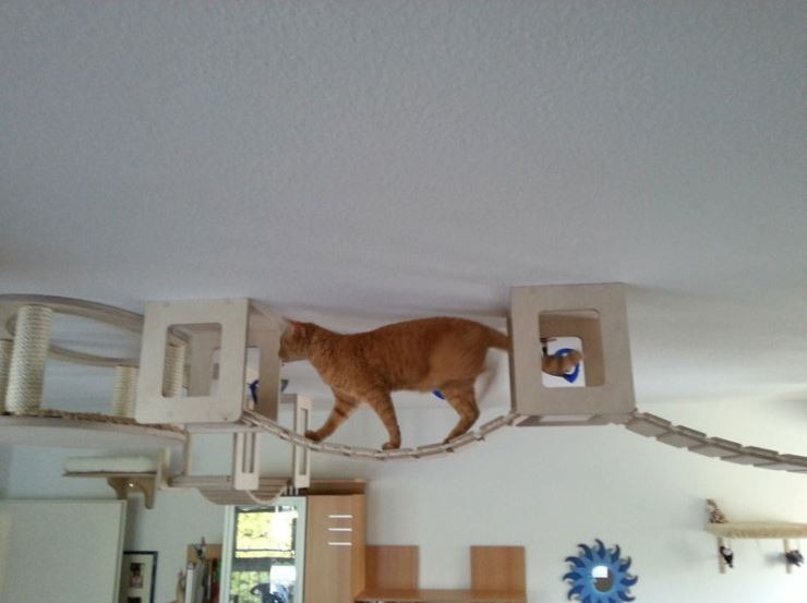 This Guy Designs And Builds The Most Awesome Cat Jungles