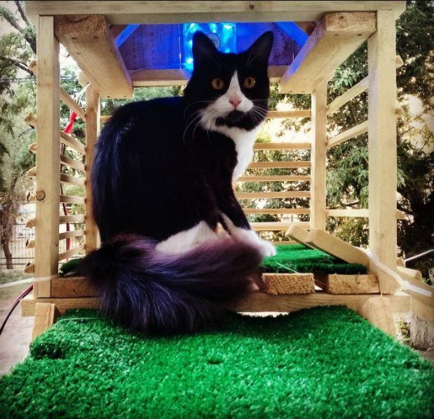 man builds glowing bridge for his cat 3