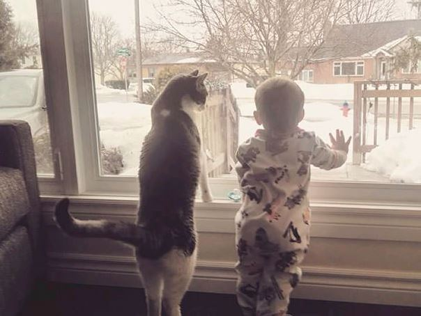 cats and kids 25