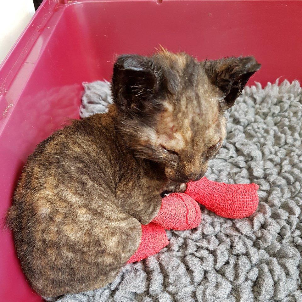 kitten found in rubble after fire 5