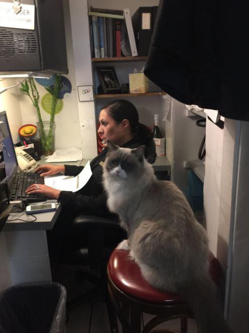cat supervisor of hotel 10