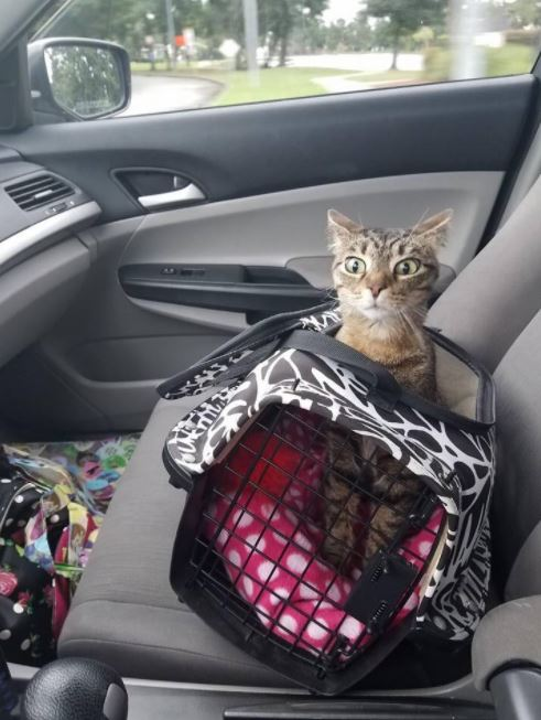hurricane harvey cat