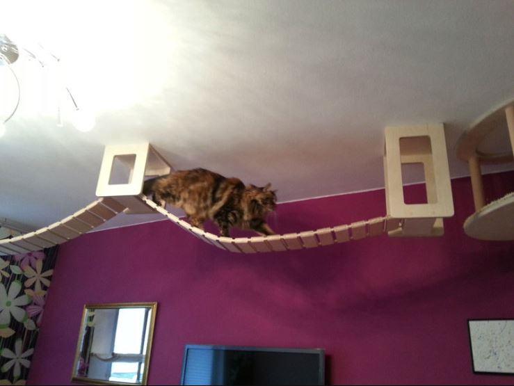 epic cat jungle gym 6