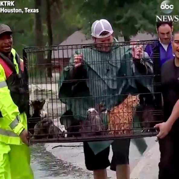 cats get rescued of Harvey Hurricane