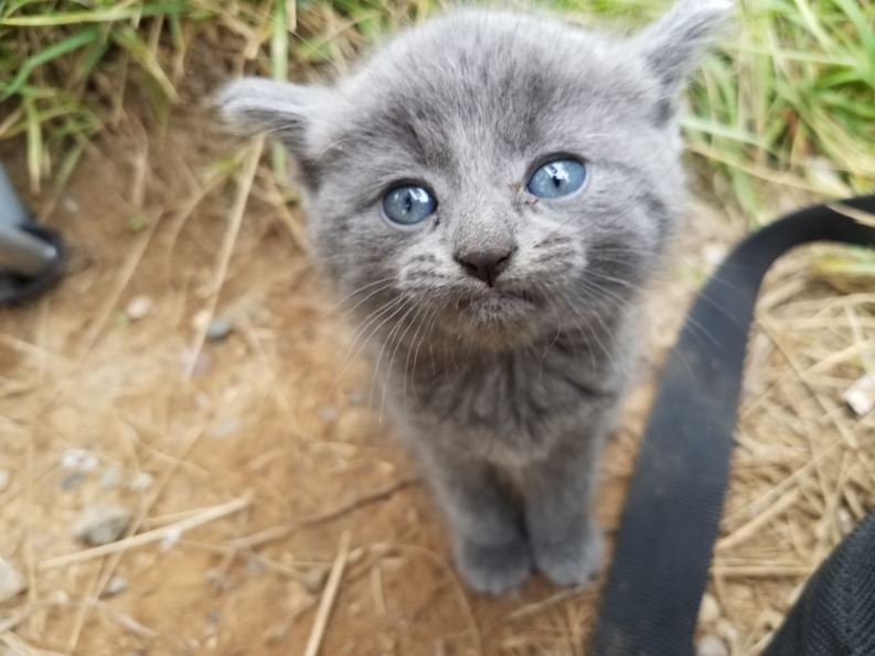 kitten rescued after fishing trip 2
