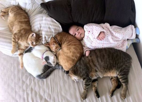 cats and kids 17