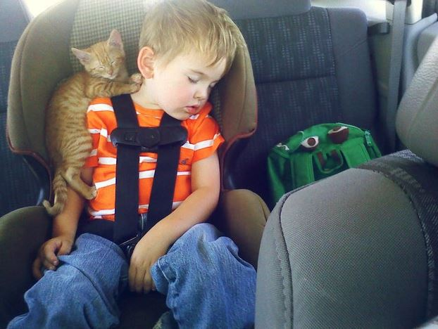 cats and kids 30