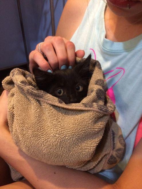 kitten found in garage