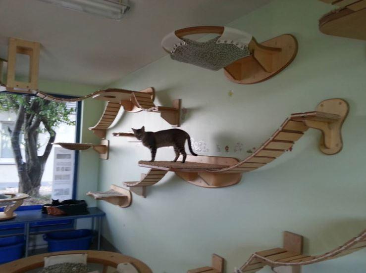 epic cat jungle gym 11