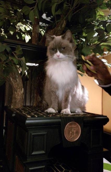 cat supervisor of hotel 7