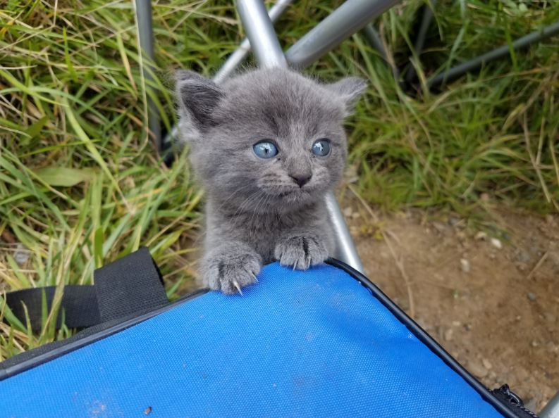 kitten rescued after fishing trip 1