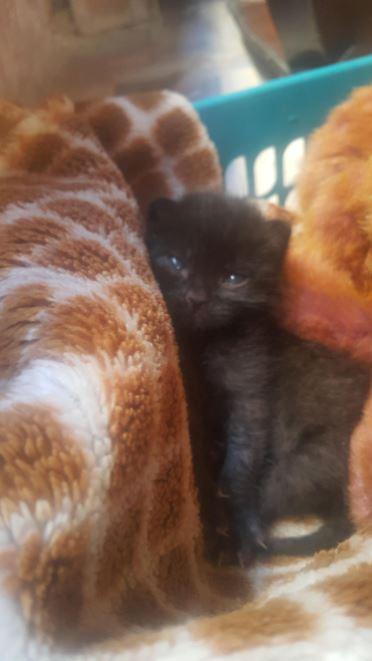 black kitten and teddy bear 6