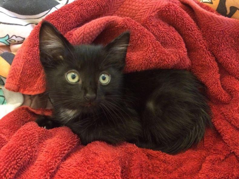 kitten found in garage 2