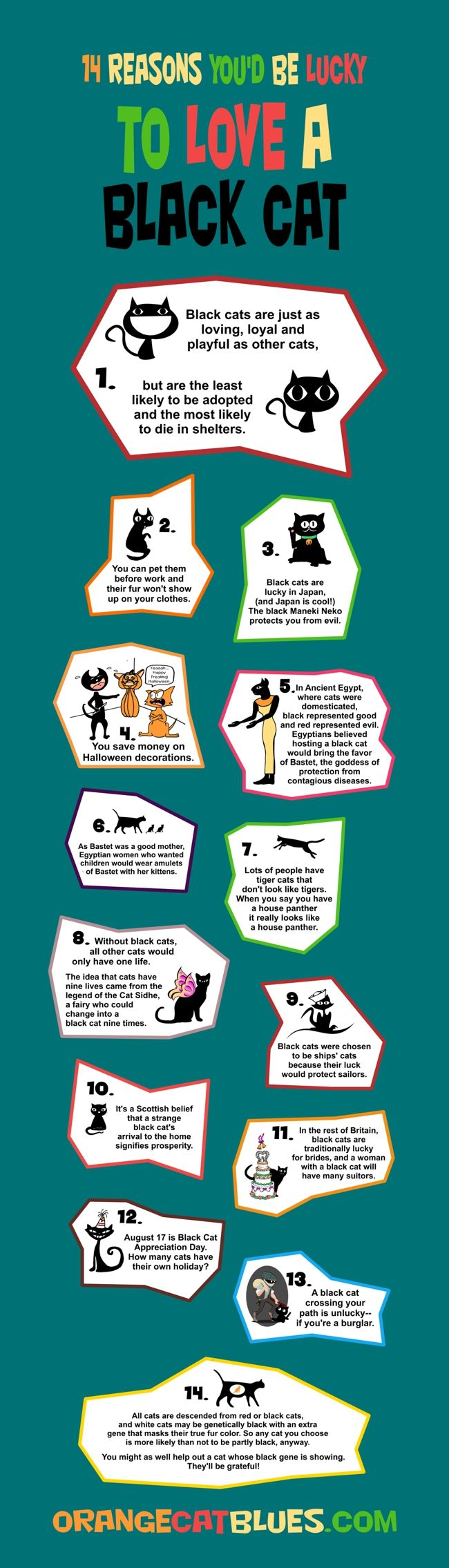 14 reasons why to love a black cat