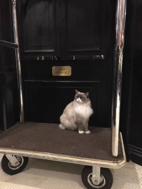 cat supervisor of hotel 12