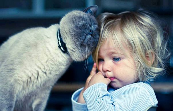 cats and kids 14