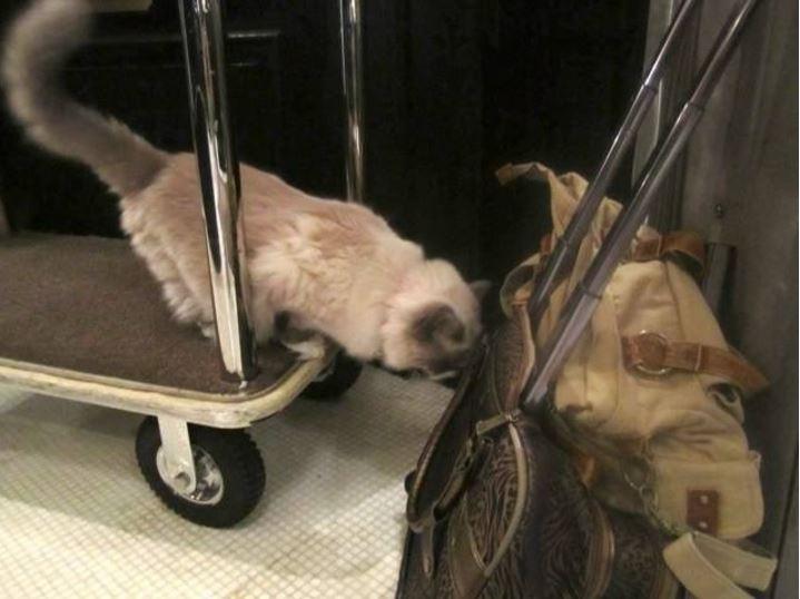 cat supervisor of hotel 4