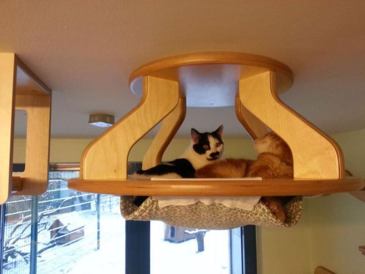 epic cat jungle gym 15