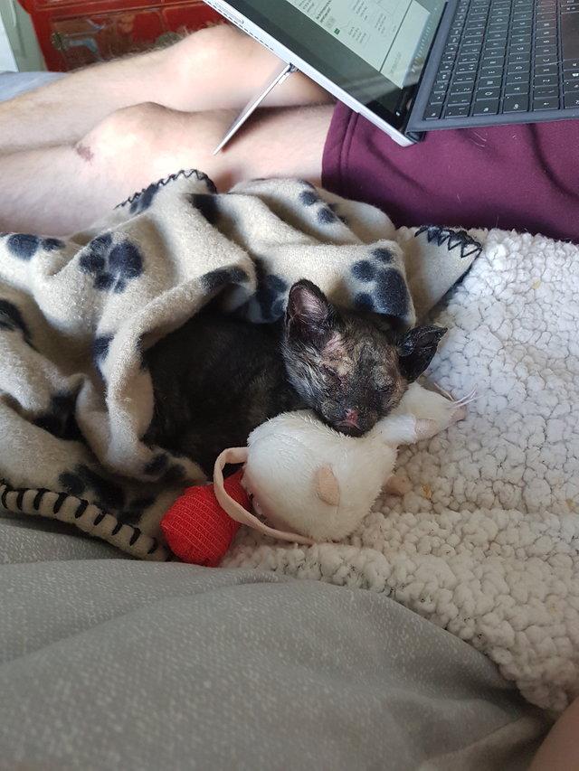 kitten found in rubble after fire 4