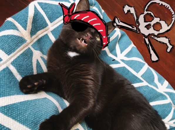 wesley the pirate cat 8