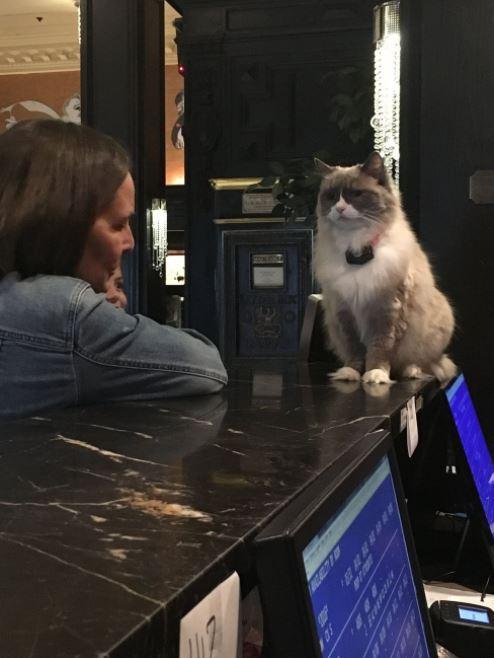cat supervisor of hotel 2