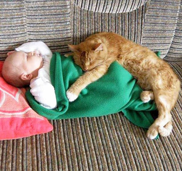 cats and kids 27
