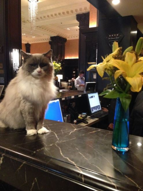 cat supervisor of hotel 5