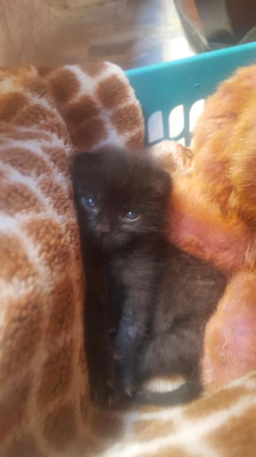 black kitten and teddy bear 7
