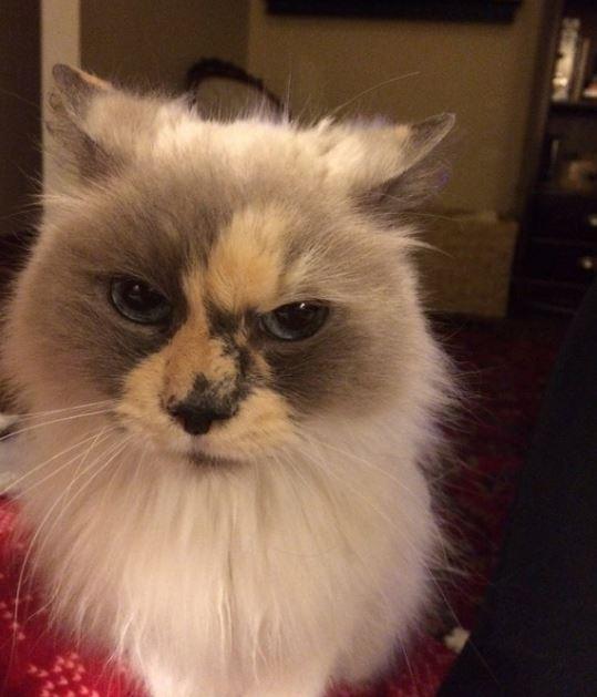 kitten found in garage 4
