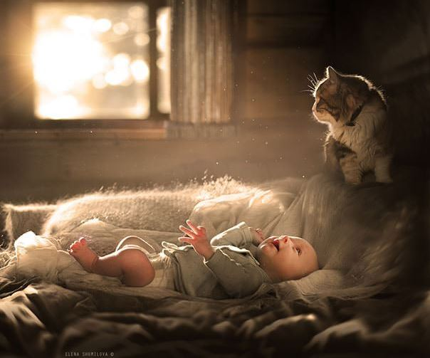 cats and kids 2