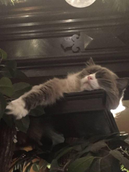 cat supervisor of hotel 8