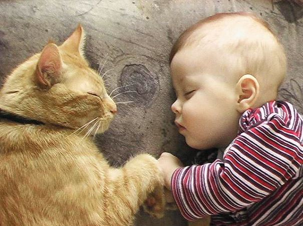 cats and kids 28