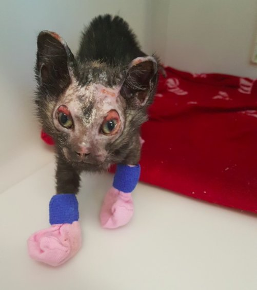 kitten found in rubble after fire 3