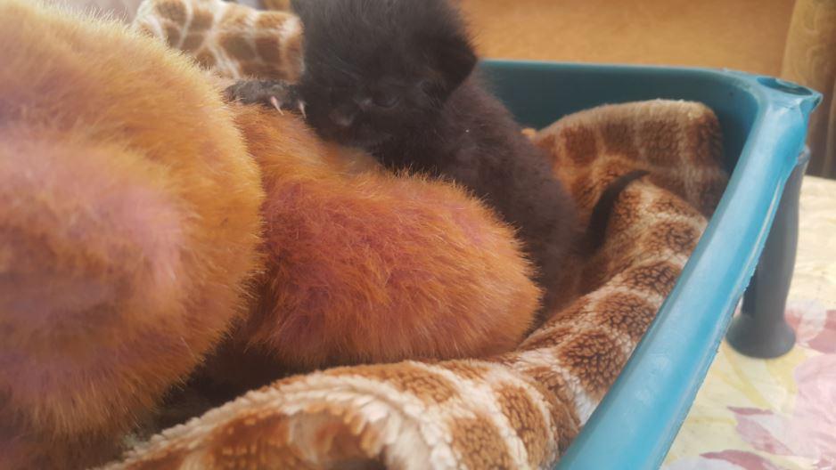 black kitten and teddy bear 3