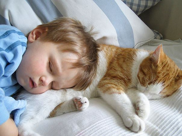cats and kids 24