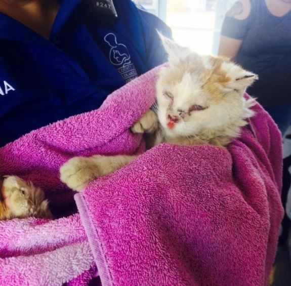 cat with broken nose gets rescued 1