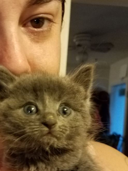 kitten rescued after fishing trip 4