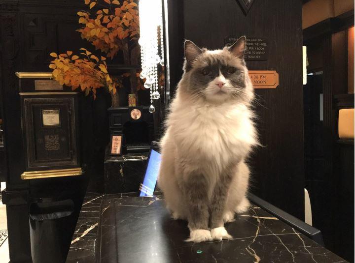 cat supervisor of hotel 1